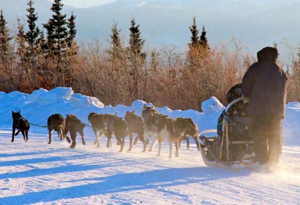 Denali Dog Sledding
